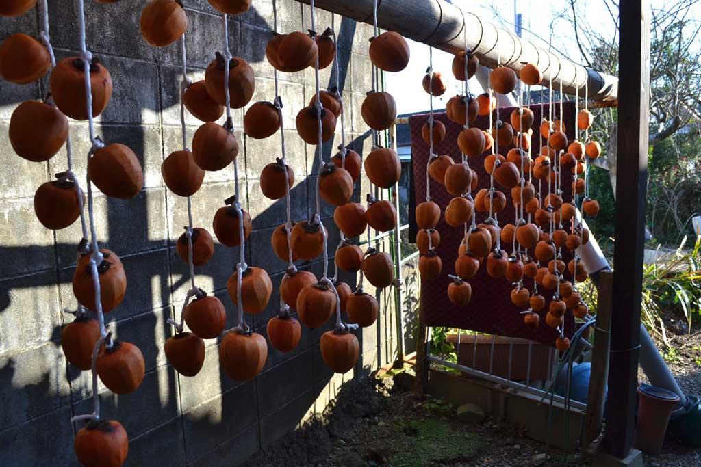 熟成中の干し柿群