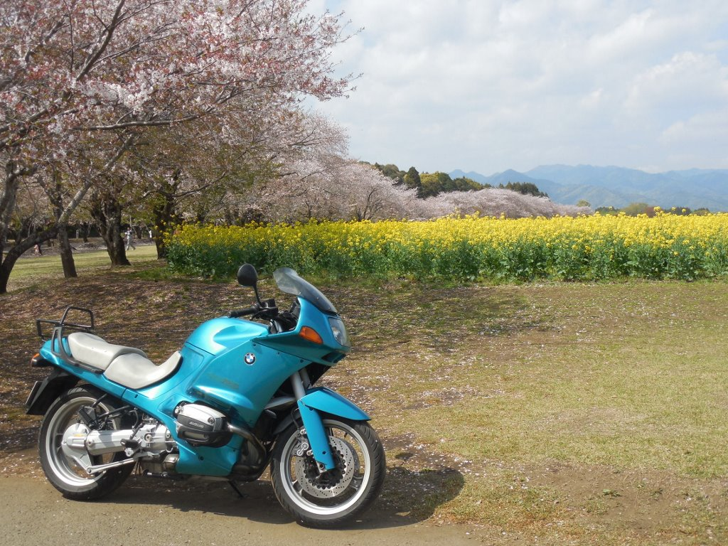 西都原古墳群の桜と、広大な菜の花畑