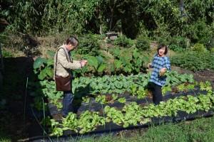 家庭菜園には色んな野菜が栽培されています